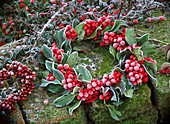 Ilex verticillata (red winter berry) wreath in hoarfrost