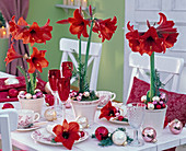 Christmas table decoration with red Hippeastrum (Amaryllis)