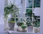 Theme window fragrance