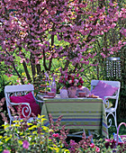 Seating in front of the blooming Prunus 'Kanzan' (ornamental cherry)