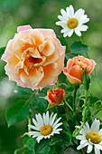 Pink 'Cubana', apricot, often flowering, light scent,