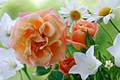 Rose 'Cubana', apricot, often flowering, light scent
