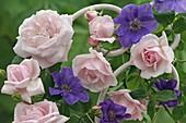 Pink 'New Dawn' (climbing rose), often flowering, light apple scent