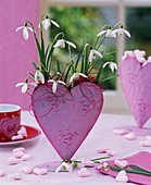 Galanthus nivalis (snowdrop) in heart vase on the table
