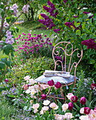 Pink metal chair in front of blooming syringa (lilac)