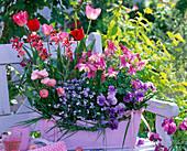 Aquilegia, Tulipa, Myosotis