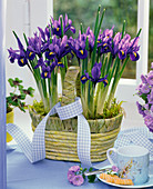 Iris reticulata in basket with ribbon by the window, espresso cup