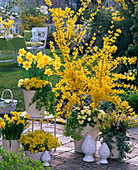 Yellow terrace with Forsythia, Narcissus