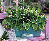 Fragrance box with Convallaria majalis (lily of the valley)