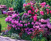 Rhododendron (alpine rose), Aquilegia (columbine), Heuchera