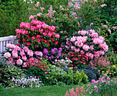 Spring bed with rhododendron (alpine rose) and perennials