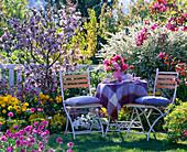 Malus (ornamental apple), Spiraea arguta (bridal pines), Tulipa (tulip)