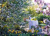 Malus 'Evereste' (ornamental apple), Tulipa 'Golden Apeldoorn'