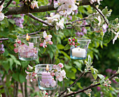 Lanterns hung on branches of flowering malus (apple)