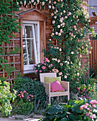 Armchairs next to Rosa (climbing rose and shrub rose) on the wall of the house