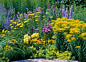 Blue-yellow bed with Solidago (goldenrod), Achillea (yarrow)