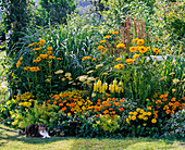 Yellow bed with heliopsis, Achillea 'Moonshine'