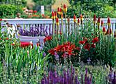 Kniphofia (torch lily), Lilium asiaticum 'Red Dwarf' (lily)