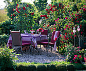 Terrace with Rose 'Flammentanz', 'Scarlet Glow'