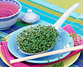 Cress in Chinese porcelain spoon