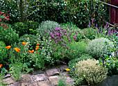 Herbalbed with Lavandula 'Stoechas', Thymus