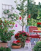 Prunus with lanterns, planted with Petunia