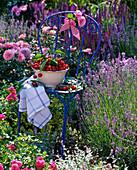 Prunus in bowl on blue chair, kitchen towel, Lavandula