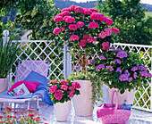 Shadow balcony with Hydrangea and lounger
