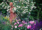 Rosa 'Mary Rose' (English scented rose), Philadelphus