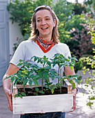 Young woman with freshly bought lycopersicon (tomato plants)