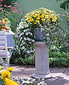 Bowl in variations, Petunia, Helichrysum