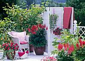 Shadow balcony with Reynoutria japonica (Asian knotweed)