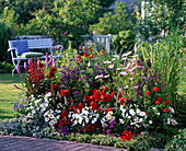 Colorful bed of summer flowers and perennials, Lobelia compliment mix