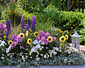 Colorful bed of perennials and summer flowers, Delphinium