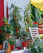 Snack balcony with lyopersicon (tomato), capsicum (paprika)