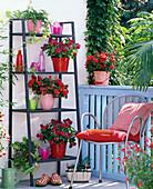 Shadow balcony with Impatiens walleriana double
