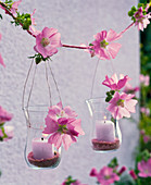 Lanterns with Malva (mallow) flowers on a string