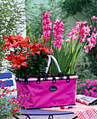 Lilium 'Red Dwarf' (lily), gladiolus