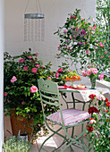 Scented balcony with Rosa 'Mary Rose' (English Rose), Lathyrus