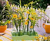Small bouquets of Anthemis, Solidago, Foeniculum