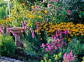 Rudbeckia fulgida 'Goldsturm' (Yellow Sunhat), Liatris