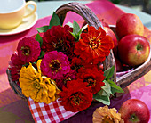 Zinnia, freshly cut, and Malus in basket, napkin