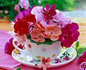 Bouquet of different pelargonium in dotted cup