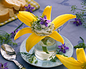 Hemerocallis blossom with herb quark, decorated with Borago
