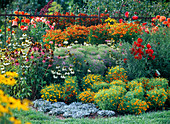 Colorful late summer bed, Echinacea (red and white coneflower)