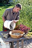 Plant bowl with sedum