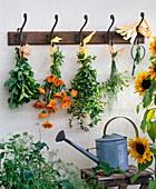 Herbs hung to dry: Melissa, Calendula