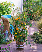 Thunbergia on a stick covered pot