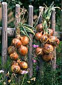 Braid onion