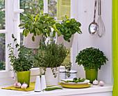 Herbs on the window: Origanum, Thymus, Salvia